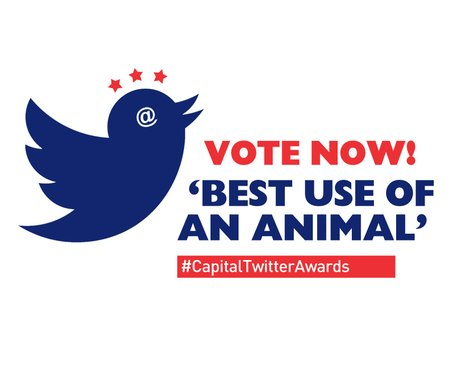 Twitter Awards 2014: Best Use Of An Animal