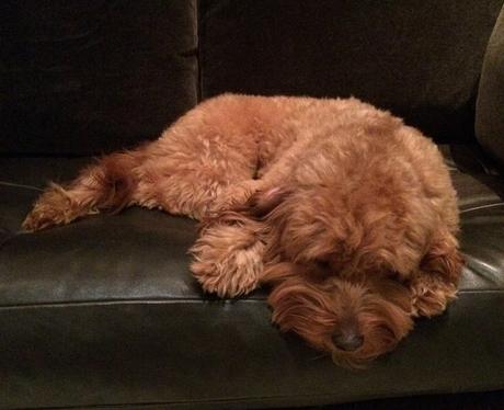 Usher Dog Poppy